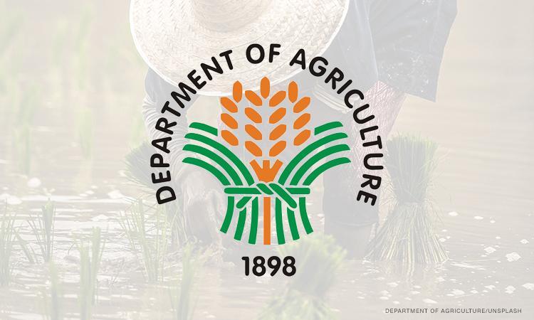 DA allots ₱400M for promotion of urban agri among Filipino households